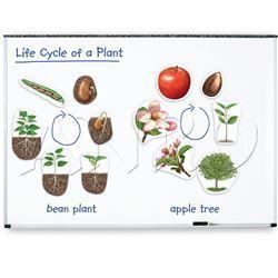 Ciclos de vida magnéticos - planta 12 pzas - 616045