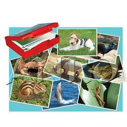 Fotografia animales - 29020505